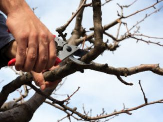 16-Helpful DIY Tree Removal Tips